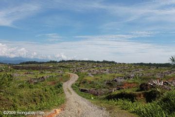 Autrefois, c'était une forêt tropicale et maintenant c'est une plantation d'huile de palme: cette plantation en monoculture  se situe près du Parc national de Gunung Leuser à Sumatra. L'Indonésie a cette année mis en oeuvre un moratoire sur les nouvelles concessions accordées pour l'abattage de bois et les plantations. les résultats en sont mitigés.  Photo de Rhett A. Butler.