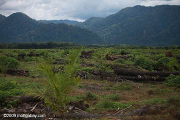 Oil palm plantation in the foreground with rainforest-covered hills in the back on the island of Sumatra. Photo by: Rhett A. Butler.