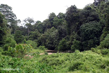 Forest and creek in Bukit Barisan Selatan National Park. Photo by: Rhett A. Butler.