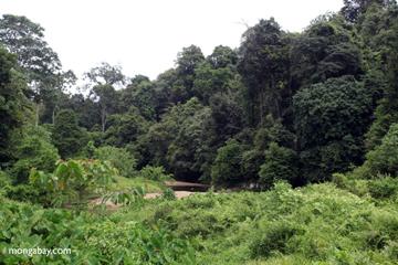 Forest and creek in Bukit Barisan Selatan National Park. Photo by: Rhett A. Butler.