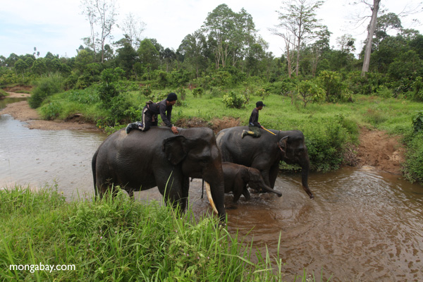 Rangers on elephant back in Sumatra, although most patrols are on foot. Photo by: Rhett A. Butler, 2011.