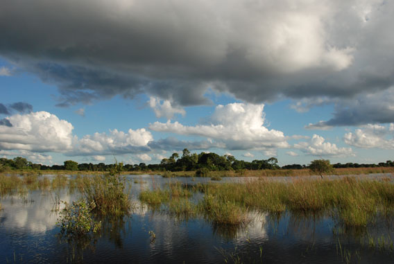 Landscape view of the Pantanal during the floods.  Photo by: Patrícia Medici.