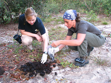 Patrícia Medici and volunteer Kelly Russo collecting tapir fecal samples for genetic, health and diet studies at Baía das Pedras Ranch, study area of the Pantanal Tapir Program in the Nhecolândia Sub-Region of the Brazilian Pantanal.  Photo by: Danilo Kluyber.