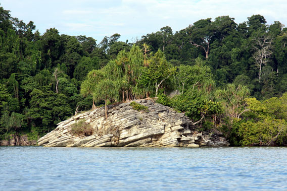 Pristine coastal vegetation: Misool island, Raja Ampat. Photo by: Dimtry Telnov, 2009.