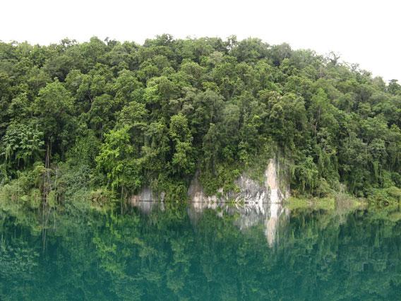 Pristine rainforest around Lake Kamakawalar, New Guinea. Photo: Dmitry Telnov, 2010.