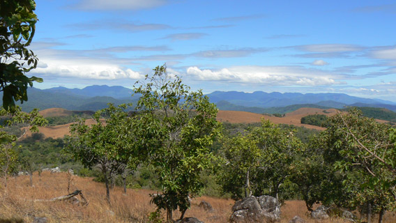 The view from Krang Mountain in Virachey National Park. Photo by: Greg McCann.
