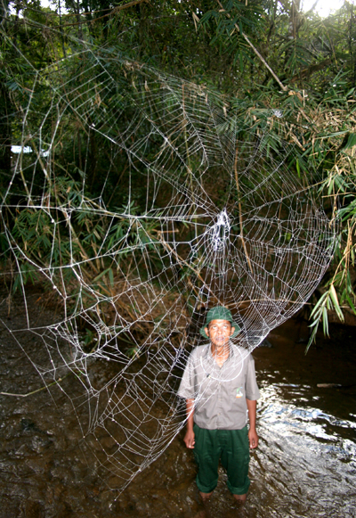 Named after Charles Darwin, a new species of orb-weaving spider from Madagascar builds monster webs: one web measured 82 feet across, spanning a river. Known as the Darwin's bark spider (Caerostris darwini), the new arachnid also produces the world's strongest spider silk: twice as strong as any other known spider silk and 10 times stronger than Kevlar. Once again nature proves it is the master engineer. This photo was taken in Madagascar's Andasibe-Mantadia National Park. © Matjaž Kuntner (Scientific Research Centre of the Slovenian Academy of Sciences and Arts).