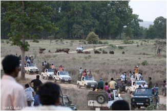 Jeeps crowd a road in an Indian National Park. Photo by: Krithi Karanth.