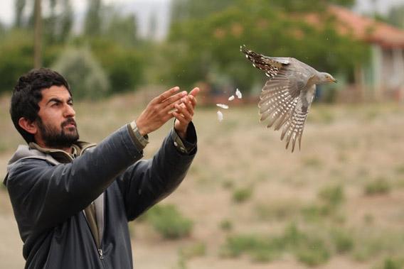 KuzeyDoga Ornithologist and Master Bird Bander Sedat Inak releasing a cuckoo he just banded. Photo courtesy of: Cagan Sekercioglu.