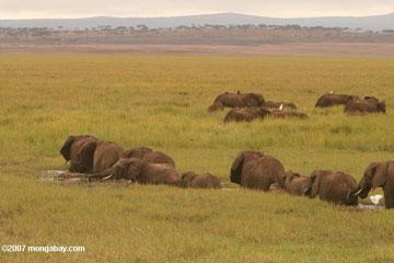 Elephants in Tanzania. Photo by: Rhett A. Butler.
