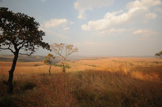 Unlike much of the DRC, Upemba National Park is largely savannah. Photo by: Frankfurt Zoological Society (FZS).