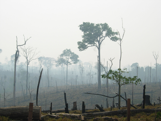 Burnt forest in the Amazon. Photo by: Alexander Lees.