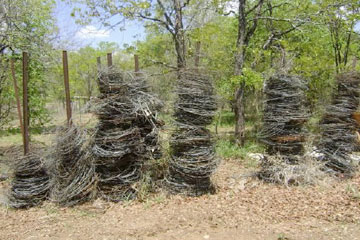 Wire snares confiscated in Zimbabwe. Photo by: Patience Gandwina.