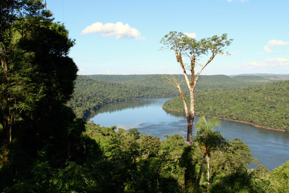 The Atlantic Forest in Misiones. Photo by: WLT.